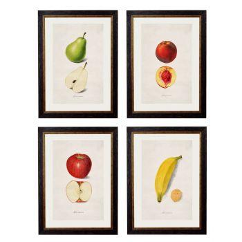 1886 'Studies of Fruit' Framed Print