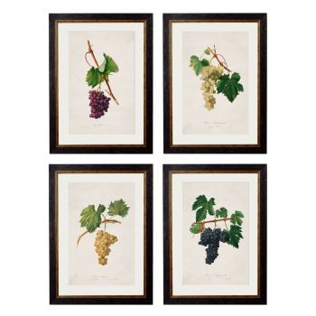 1817 Botanical Grapes Framed Print