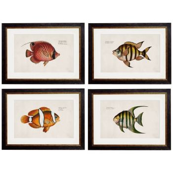 1785 Tropical Fish Framed Prints