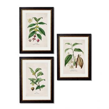 C.1877 Tea, Coffee and Chocolate Plants Vintage Prints