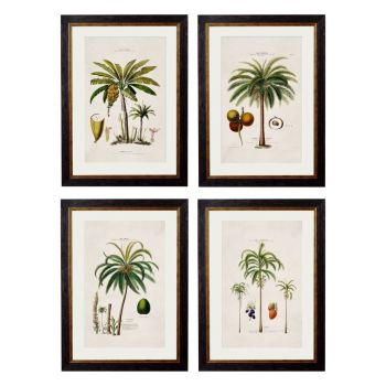1843 American Palm Trees Framed Print