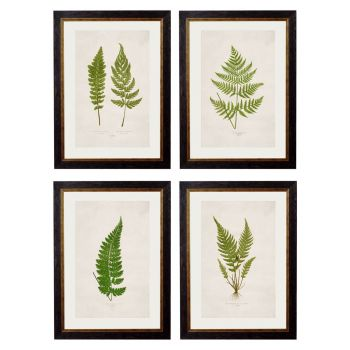 1864 British Fern Framed Prints