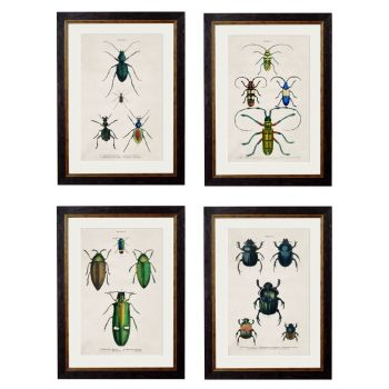1836 Study of Beetles Framed Print