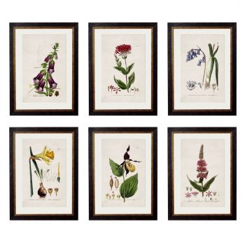 C.1837 British Flowering Plants Vintage Prints