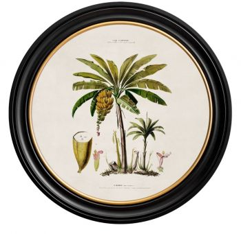 C.1812 Vintage Pineapple Study with Round Frame