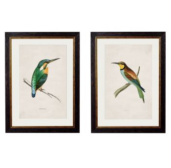 C. 1870 Colourful British Birds Vintage Prints
