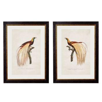 1809 Toucans Framed Print