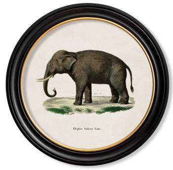 C.1846 Indian Elephant with Round Frame Antique Artwork