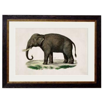 1846 Vintage Elephant Framed Print