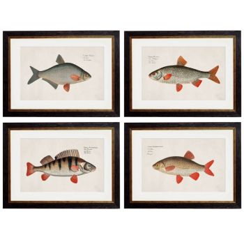 1785 Fresh Water Fish Framed Prints