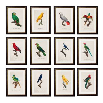 C.1884 W.T. GREENE - Vintage Bird Prints PARROT FRAMED PRINTs