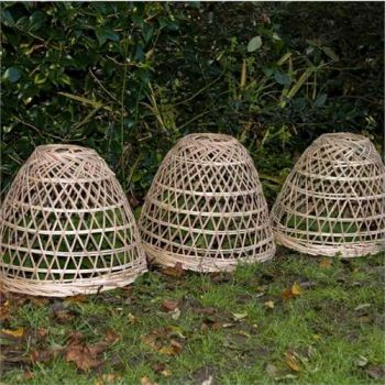 Bamboo Plant Cover