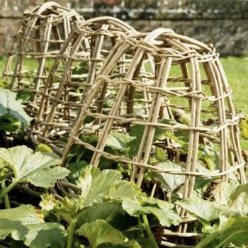 Willow Plant Covers
