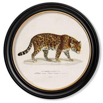 C.1836 Vintage Jaguar Print with Round Frame