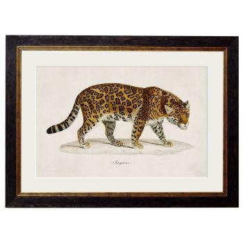 1824 Vintage Tiger Framed Print