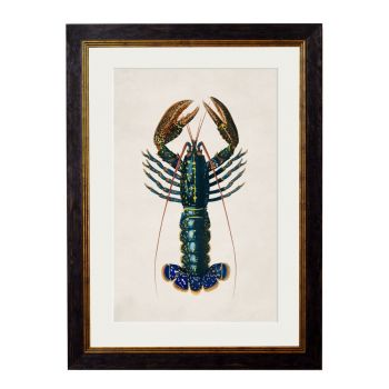 1876 Crayfish Framed Print