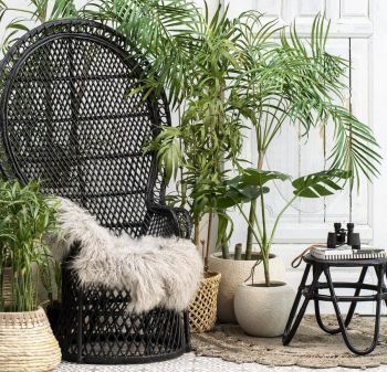 Peacock Rattan Garden Chair
