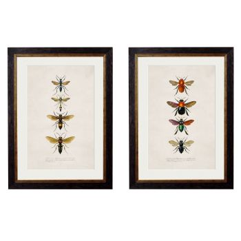 1892 'Bees and Wasps' Framed Print