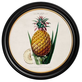 C.1843 Vintage Pineapple Plant Print with Round Frame
