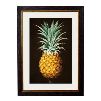 1812 Pineapple Study Framed Print