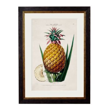1843 Pineapple Plant Framed Print