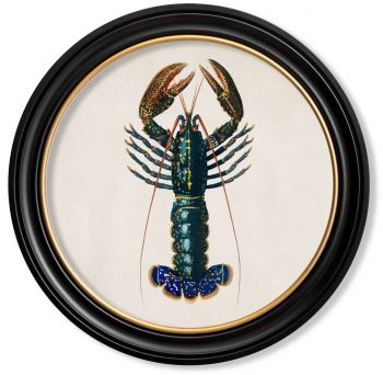 C.1876 Vintage Crayfish Print with Round Frame