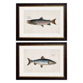 1785 Studies of Salmon Framed Print