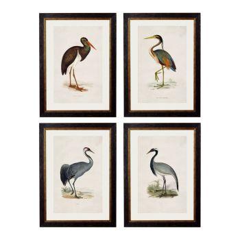 1850's British Wading Birds Framed Print