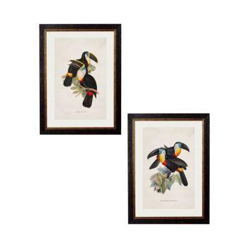 C.1848 Toucans Vintage Prints