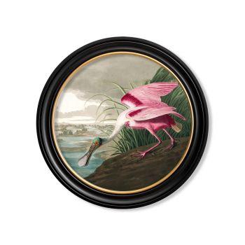 Set of vintage prints Hummingbirds