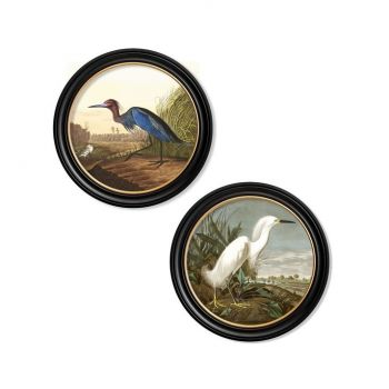 C.1838 Audubon's Heron's Round Frame Vintge Prints