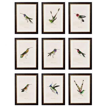 Hummingbird selection of vintage prints