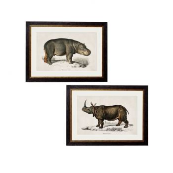 C.1846 Rhino & Hippo Round Frame Vintage Prints